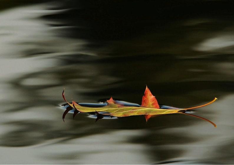 Floating Autumn Leaf photo  Afloat.  Wall decor home decor image 0