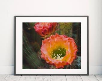 Cactus Bloom Photograph, Southwest Home Decor, Desert Photo, Southwest Art, Cactus Photograph, Cacti Art, Desert Photograph