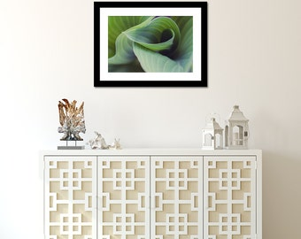 Abstract Hosta Leaves Photo, Green Wall Art, Hosta Photograph, Abstract Leaf Photo, Abstract Nature Print, Flower Photography, Hosta Print