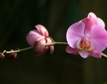 Orchid Photo, Orchid Photography, Orchid Art Print Garden Art, Purple Flower Botanical Art, Nature Photography,