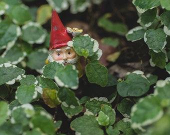 Garden Gnome Print, Gnome Photo, Gnome Photography, Whimsical Art, Nursery Art, Kids Room Art, Fairy Garden Photography, Garden Gnome Art