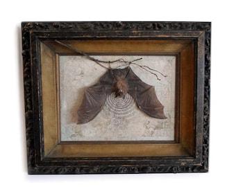 Framed Bicolored Roundleaf Bat Curio OOAK