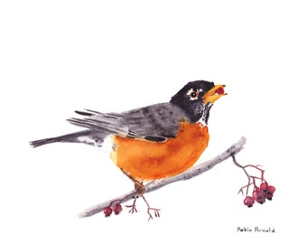 Robin Eating Berry Print of Original Watercolor Painting, animal,bird art, wildlife,nature,bird lover,American Robin,  berry, robin,