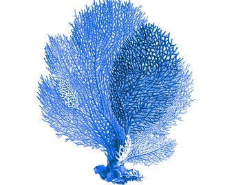 Blue Sea Fan Coral Nautical Art Print Natural History Beach House Decor Royal Blue