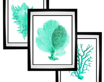 Mint Green Aqua Coral Sea Fan Conch Shell Vintage Style Nautical Art Print Set of 3 Natural History Beach House