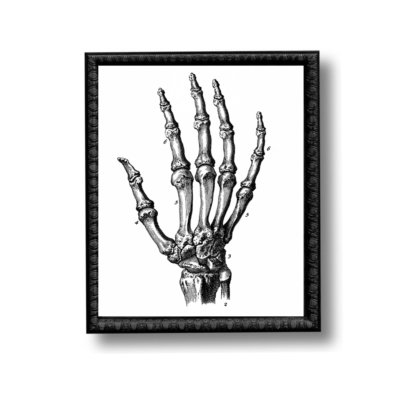 Skeleton Hand Bones Anatomy Diagram Vintage Style Art Print Etsy