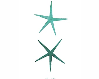 Starfish Sea Star Mint Green Nautical Art Print Natural History Beach House Decor Aqua