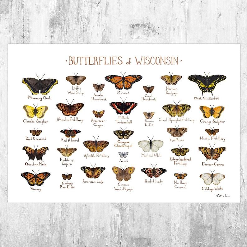 Wisconsin Butterflies Field Guide Art Print / Butterfly Poster image 0