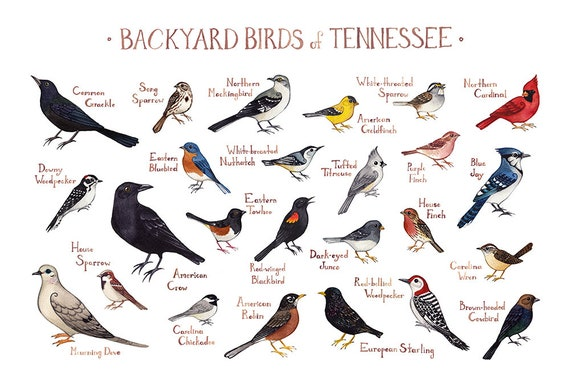 Tennessee Backyard Birds Field Guide Art Print / Watercolor | Etsy