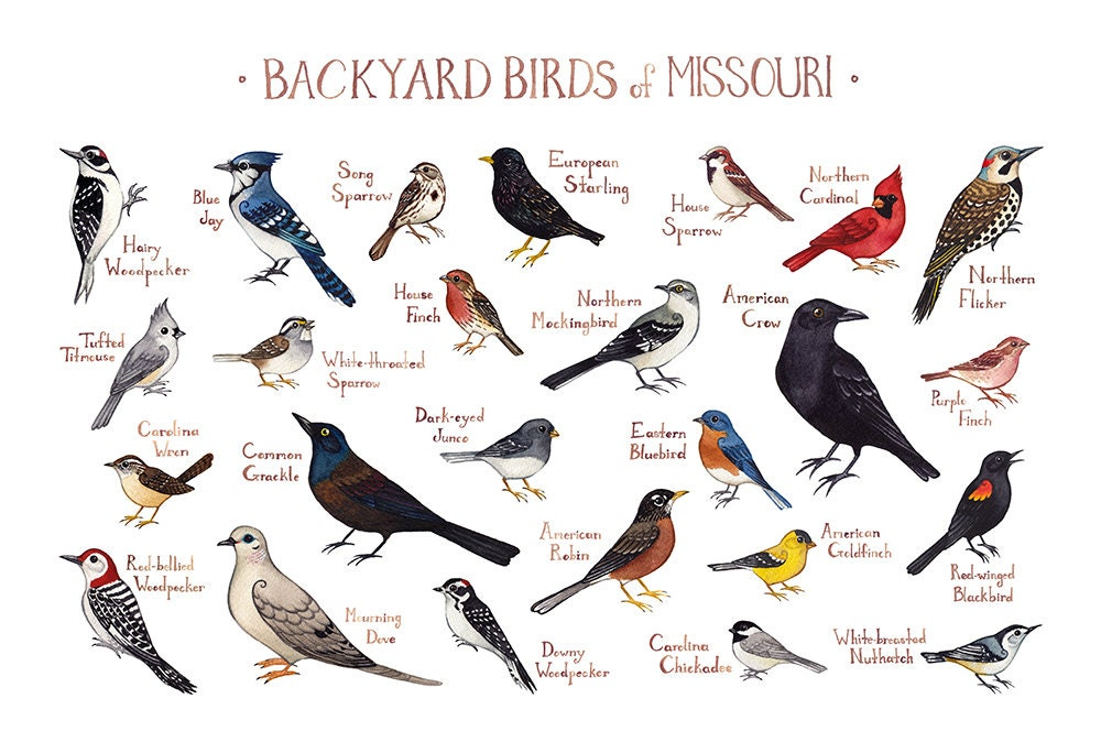 Missouri Backyard Birds Field Guide Art Print / Watercolor ...