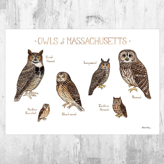 Massachusetts Owls Field Guide Art Print Watercolor Painting Etsy