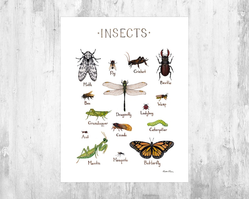 Insects Field Guide Art Print / Insect Collection / Watercolor image 0
