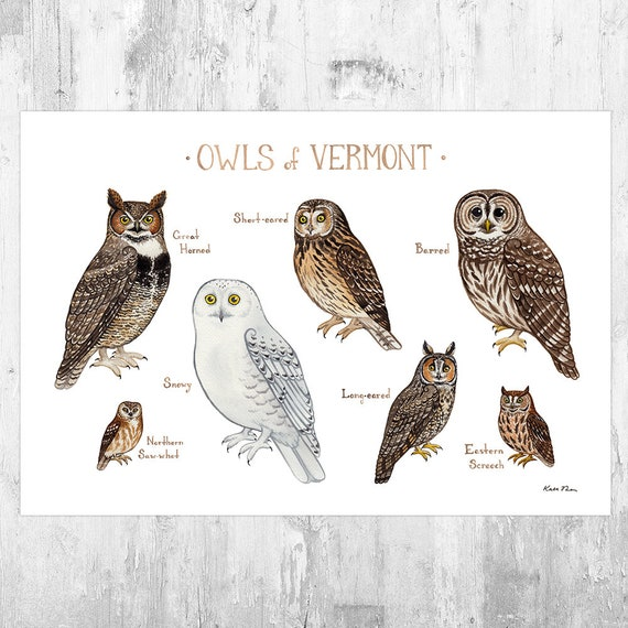 Vermont Owls Field Guide Art Print Watercolor Painting Etsy