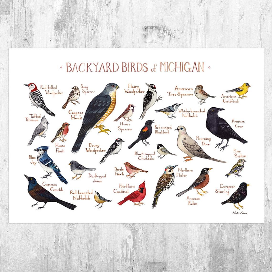 Michigan Backyard Birds Field Guide Art Print / Watercolor image 0