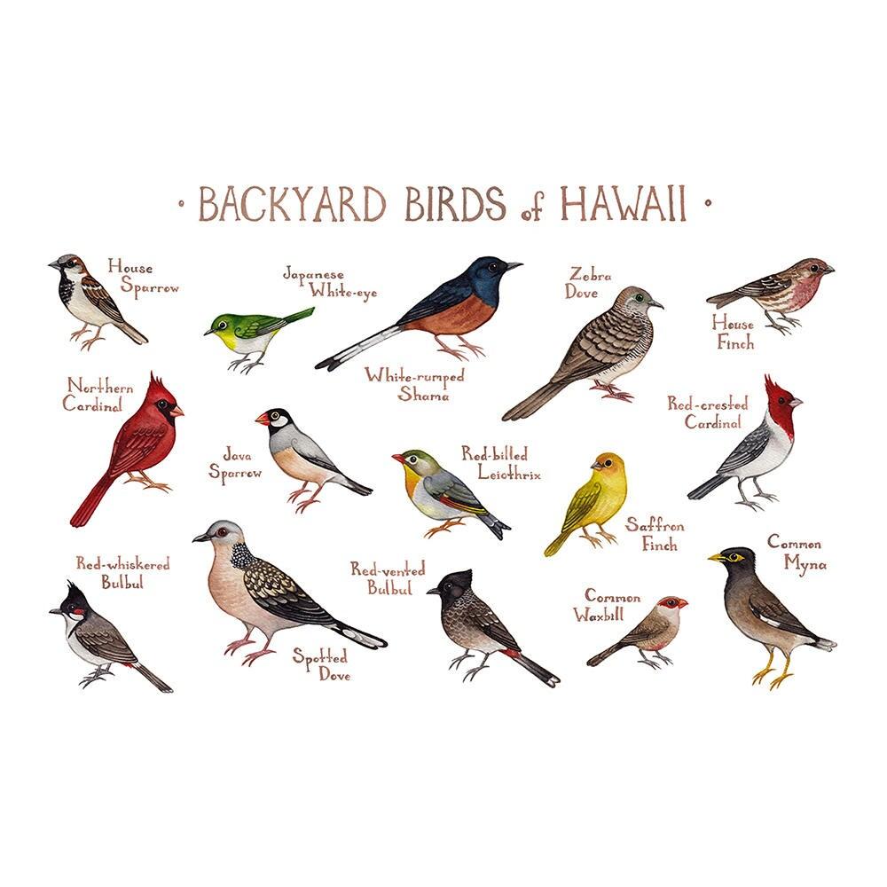 Common Backyard Birds hawaii backyard birds field guide art print / watercolor | etsy