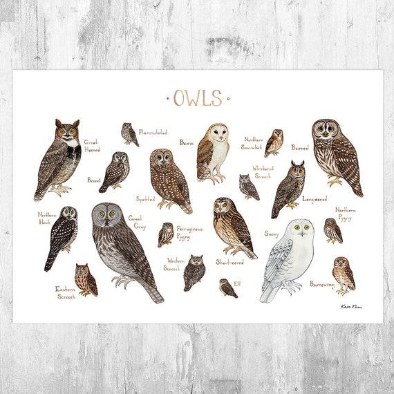 Owls Of North America Birds Of Prey Field Guide Art Print Etsy