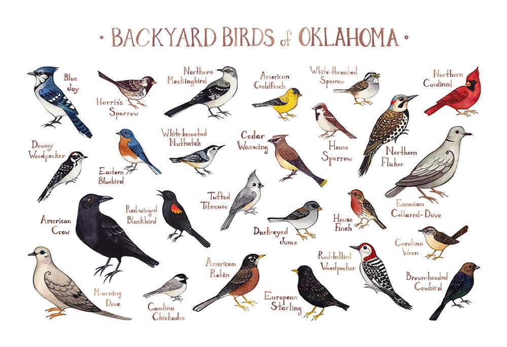 Oklahoma Backyard Birds Field Guide Art Print / Watercolor ...