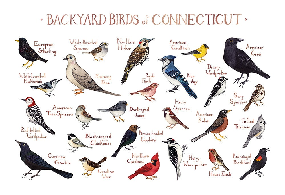 Common Backyard Birds connecticut backyard birds field guide art print / watercolor | etsy