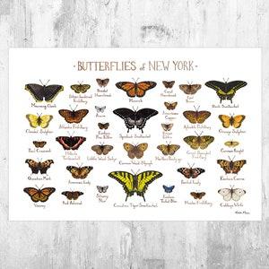 Texas Butterflies Field Guide Art Print  Butterfly Poster  Watercolor Painting  Wall Art  Nature Print