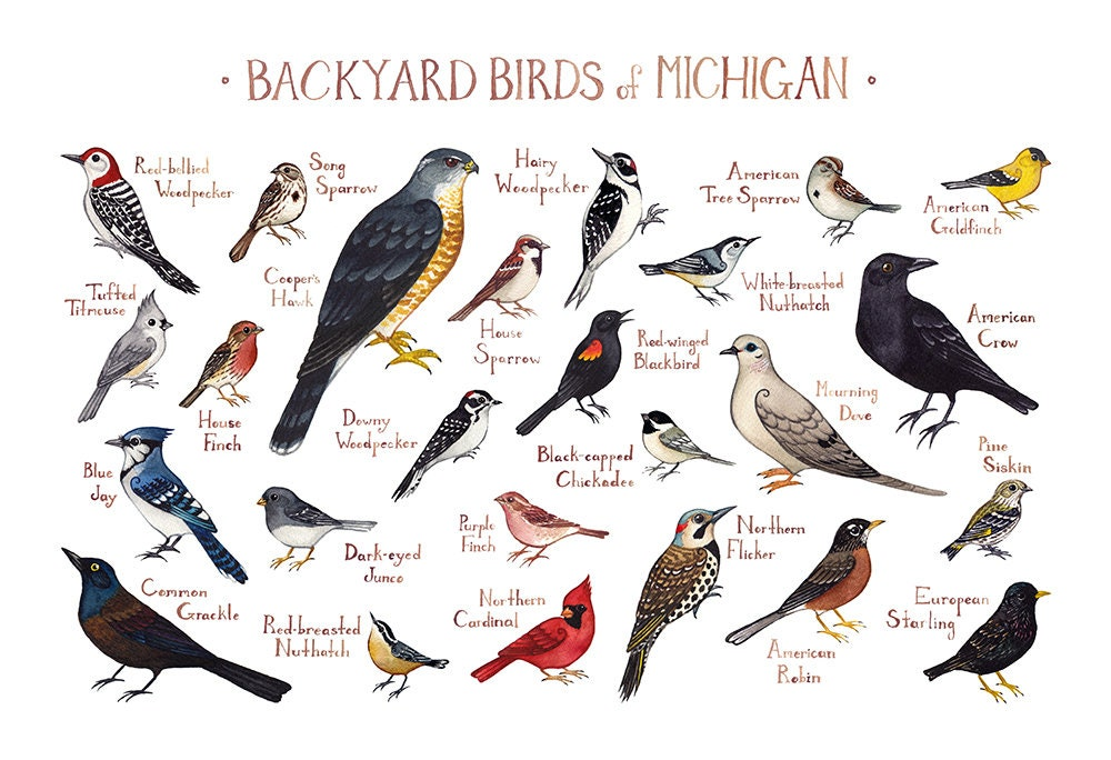 Michigan Backyard Birds Field Guide Art Print / Watercolor Painting / Wall  Art / Nature Print / Bird Poster - Michigan Backyard Birds Field Guide Art Print / Watercolor Etsy