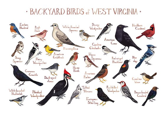 West Virginia Backyard Birds Field Guide Art Print / | Etsy