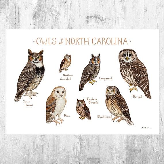 North Carolina Owls Field Guide Art Print Watercolor Etsy