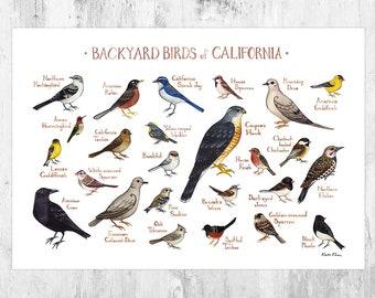 California Backyard Birds Field Guide Art Print / Watercolor Painting Print / Birdwatching Wall Art / Nature Print / Bird Poster