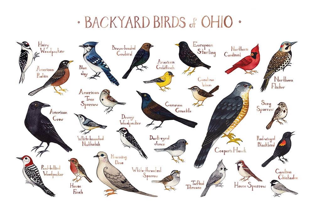 Ohio Backyard Birds Field Guide Art Print / Watercolor | Etsy