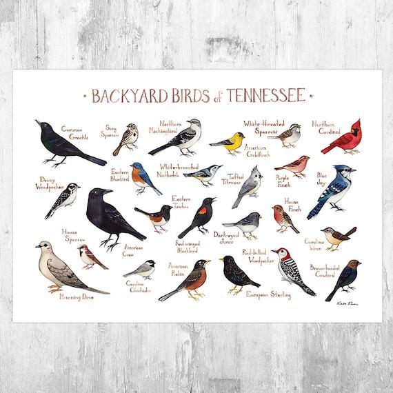 18x24 Poster Birds of Sway FRAMED