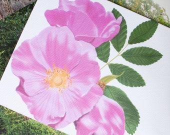 Rugosa Beach Rose Greeting Card