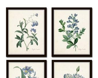 Botanical Print Set, Redoute Botanical Prints, Art Prints, Giclee, Blue Botanical Prints, Gallery Wall Art, Wall Art, Blue Flower Prints