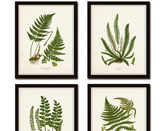 Vintage Fern Print Set No. 32, Giclee, Collage, Botanical Art, Print Sets, Vintage Fern Prints, Illustration, Vintage Botanicals, Art Print