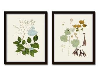 Botanical Print Set, Botanical Prints, Giclee, Art Print, Botanical Print Set, Wall Art, Print, Redoute Botanical Prints, Magnolia Prints