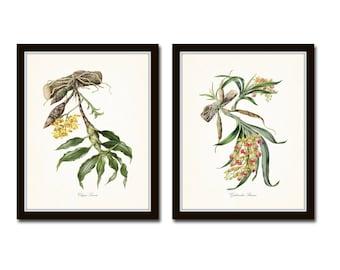Tropical Orchids Print Set, Orchid Prints, Wall Art, Home Decor, Giclee, Botanical Prints, Coastal Art, Vintage Botanical Prints