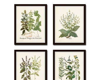 Antique Herbs Print Set No. 29, Herb Prints, Botanical Prints, Botanical Art, Botanical Print Set, Kitchen Art, Giclee, Art Prints, Herbs