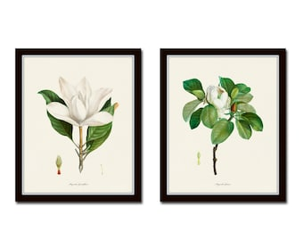 Magnolia Print Set, Botanical Prints, Giclee, Art Print, Botanical Print Set, Wall Art, Print, Redoute Botanical Prints, Magnolia Prints