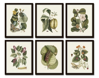 Botanical and Butterfly Print Set, Catesby, Butterfly Prints, Botanical Prints, Botanical Art, Botanical Print Set, Giclee, Art Prints