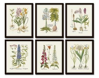 Antique Botanical Print Set No. 32, Botanical Prints, Botanical Art, Botanical Print Set, Giclee, Art Prints
