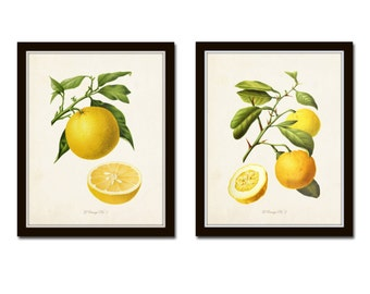 9219e3862f4 Antique French Oranges Print Set No. 2