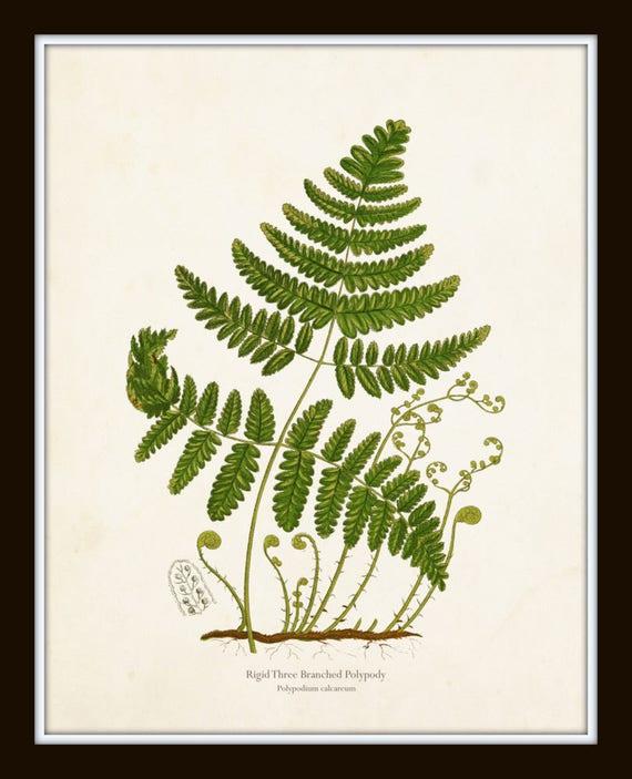 No3 Fern Botanical Leaf Prints Print A4 Vintage Reproduction Art set of 5