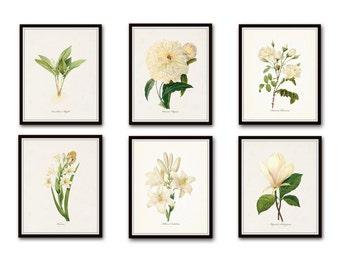 White Botanical Print Set No. 4, Botanical Print, Giclee, Art Print, Botanical Prints, Vintage Botanical, White Flower Prints, Rose, Peony