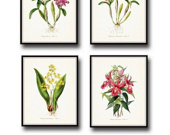 Tropical Orchids Botanical Print Set No. 2, Giclee, Art Print, Antique Botanical Print, Coastal Art, Prints, Orchid Prints,Vintage Botanical