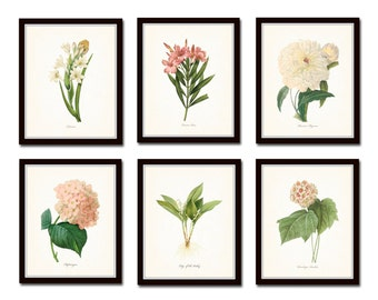 Botanical Garden Print Set No. 10, Redoute Botanical Prints, Giclee, Art Print, Antique Botanical Prints, Flower Prints, Pink, White, Floral