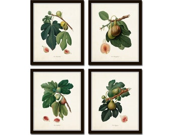Botanical Print Set, Italian Figs Print Set No. 3, Botanical Art, Fruit Prints, Giclee, Wall Art, Art Prints, Wall Decor, Kitchen Art