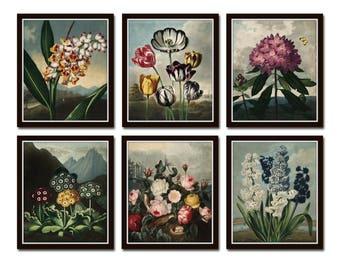 Botanical Print Set No. 16, Antique Botanical Prints, Giclee, Art Print, Botanical Prints, Wall Art, Print, Cottage Decor, Botanical Art
