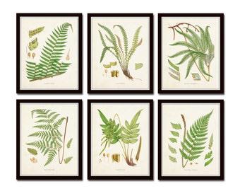 British Ferns Print Set No. 25, Botanical Prints, Giclee, Art Prints Antique Botanical,Poster, Large Art Prints, Fern Prints, Botanical Art