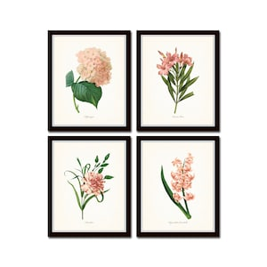 Flames Lily Botanical Art French Garden Redout\u00e9 FLOWER POSTER PRINT 1800s