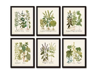 Antique Herbs Print Set No. 32, Herb Prints, Botanical Prints, Botanical Art, Botanical Print Set, Kitchen Art, Giclee, Art Prints, Herbs