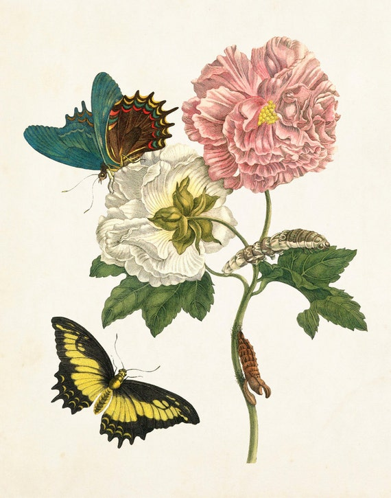 Vintage Botanical Print horticultural Victorian art sketch poster A3 No.1