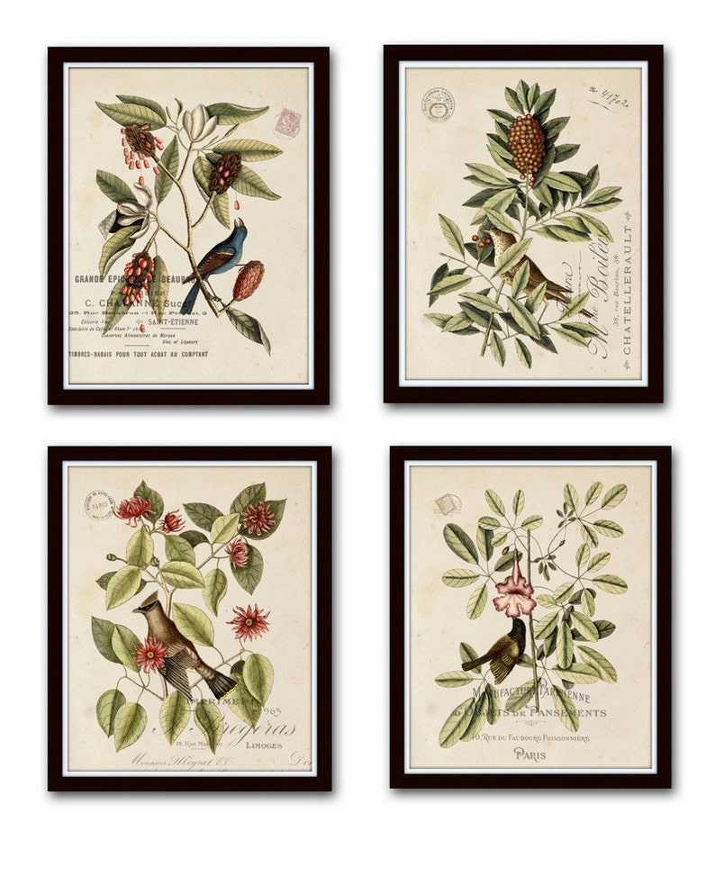 Vintage Bird and Botanical Print Set No.1 Giclee Art Prints image 0